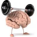 paměť - mozek